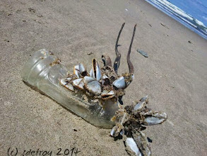 Photo: I am grateful for noticing this very unusual mix of ocean life and human waste. Looks artistic to me.