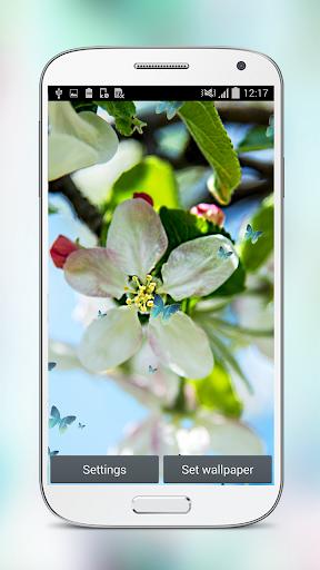 玩免費個人化APP|下載春の 桜 の花 ライブ壁紙 app不用錢|硬是要APP