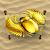 Gold Scarabaeus