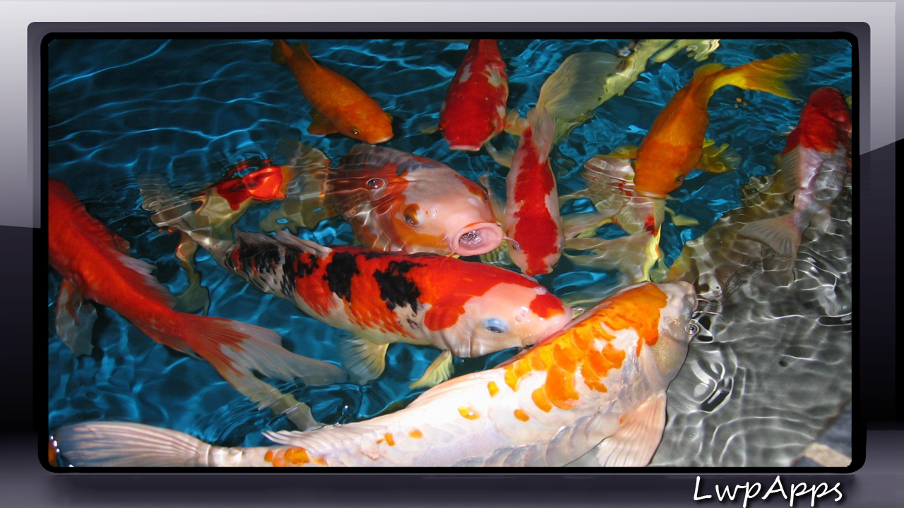 Koi Fish Pack 3 Wallpaper - Android Apps on Google Play