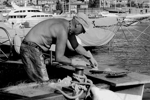 Fishing, cutting and selling.  di gterzolo