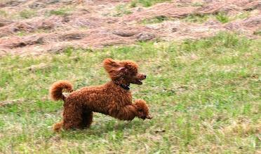 Photo: Ivo beim Laufen.