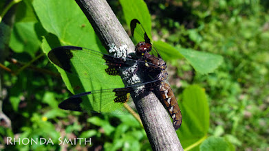 Photo: A close up shot of the dragonfly.