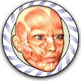 Speed Anatomy Quiz Free icon