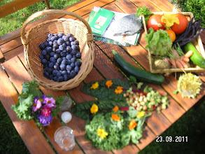 Photo: meine Obst- und Gemüseernte