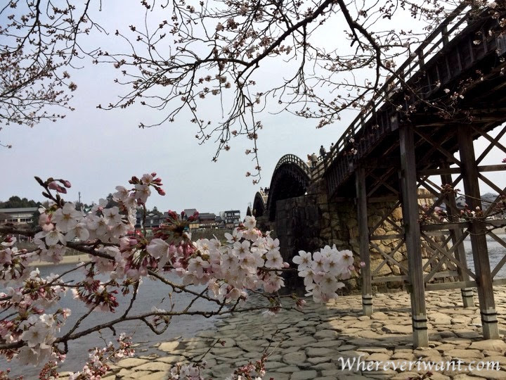 These views of sakura (cherry blossoms) will make you want to go to Japan right now!