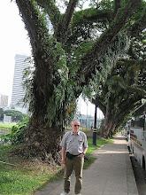 Photo: P7140022 SINGAPUR czy to miasto czy las tropijkalny