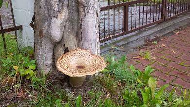 Photo: G8102748 Poreba Wielka - kania o gigantycznej nodze