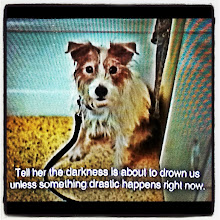 "Photo: Jack Russell from the  movie ""Beginners""."