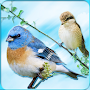 Bird Ringtones 2017 APK icon
