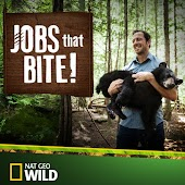 Jobs That Bite!