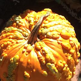 Glowing Orange by Roxanne Dean - Public Holidays Halloween ( orange, seasonal, warm, fall, vegetable,  )
