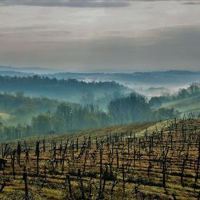 Colline senesi by Francesco Benettolo - Landscapes Mountains & Hills ( toscana, colline, nebbie in collina, panorama collinare, vigneto )