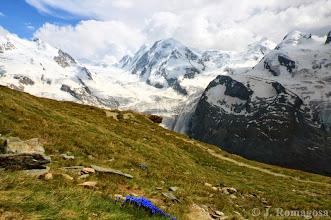 Photo: Blue Flowers of the Matterhorne