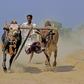 bull cart  by Ghazan Joyia - Sports & Fitness Other Sports (  )