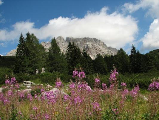 Panorama montano (Creta di Aip) di cristianopugnetti