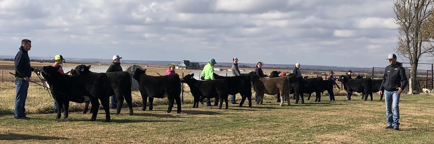 One-Day Intensive Beef Showmanship Workshop
