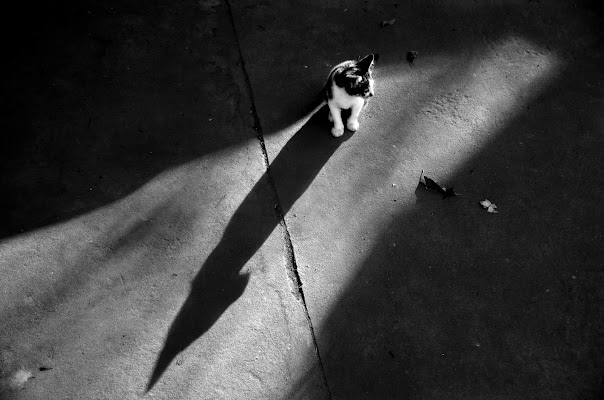 The cat is on the shadow di Migliu