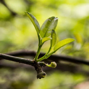 by Agus Aktawan - Nature Up Close Leaves & Grasses