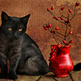 Felix by Panait Sorin - Artistic Objects Still Life ( canon, cat )