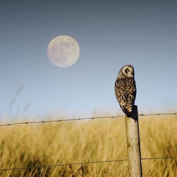 Photo: Owling At The Moon