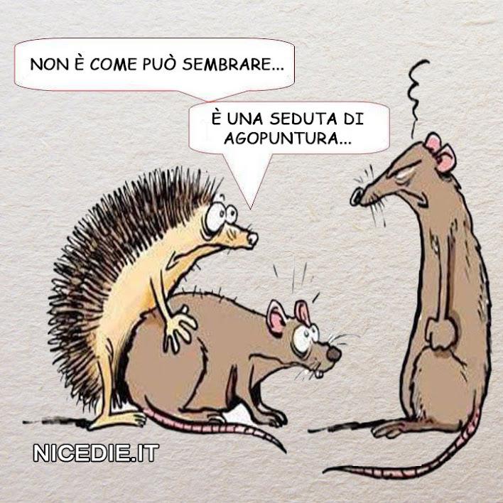 un riccio si sta facendo una topa, il topo è piuttosto perplesso