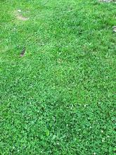 Photo: Wow, such green grass!!!
