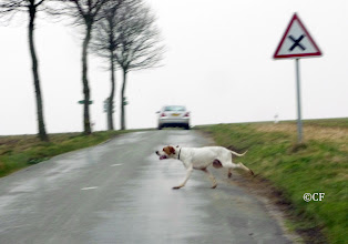 Photo: Attention, passage de chiens !