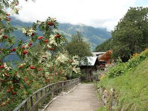 Photo: Bunte Flora am Gasteiner Höhenweg