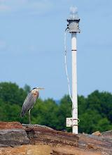 Photo: Bird greeter at Burton Island State Park by Matt Parsons