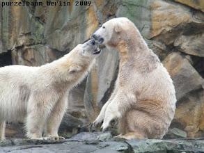 Photo: Knut und Gianna - gutgelaunt und verspielt :-)