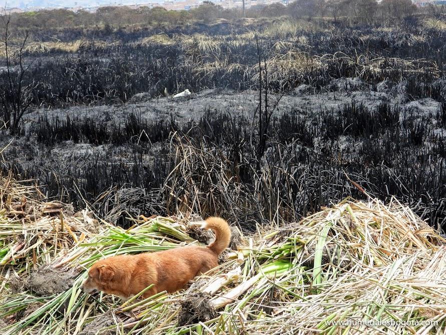 Perros en el humedal Tibanica