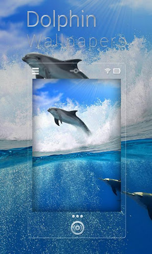Dolphin Live Wallpaper HD Free