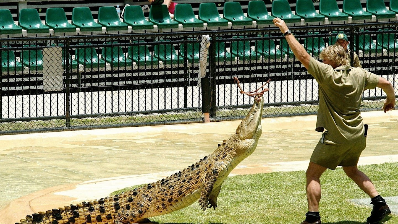 Watch The Crocodile Hunter Diaries live