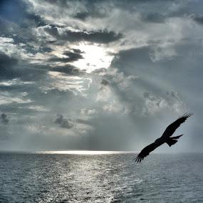 Cliff top hunter by Mik Oliver - Landscapes Cloud Formations ( hawk, hunting, India, Kerala, Varkala, bird, sky, silhouette, backpacking, tattooartist, tattooist, norwichtattooist, hunter, inkedmik, flight )