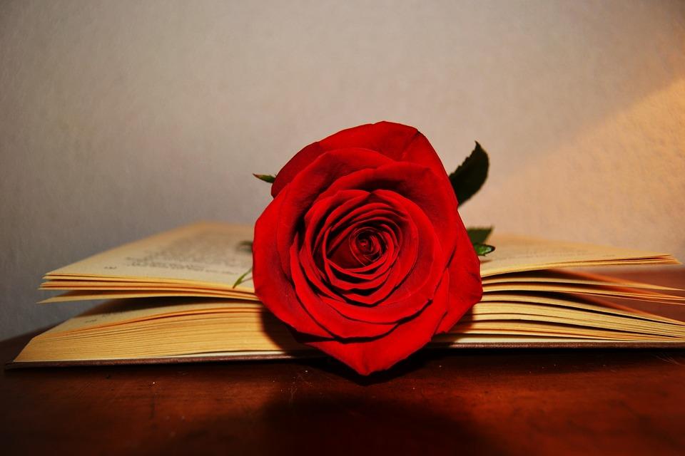 ¿Por qué se regala una rosa roja en Sant Jordi?