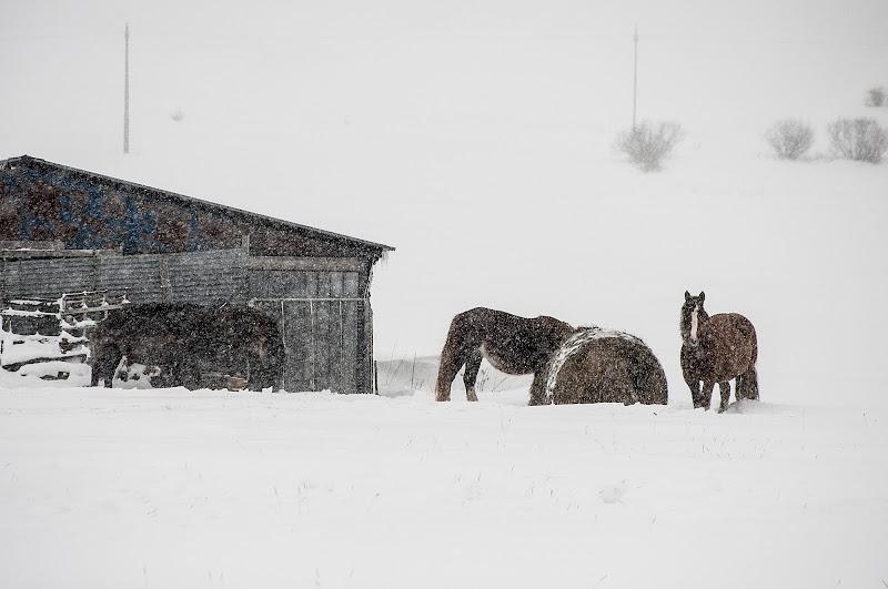 winter in Castelluccio di gabrielecollini