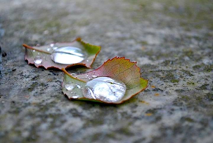 Autumn is coming di Alis93