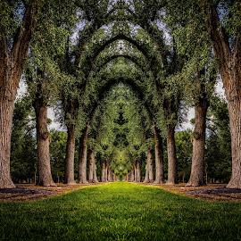 Liberty Park by Brandon Montrone - Digital Art Places ( abstract, reflection, park, grass, art, fine art, landscape, mirror, trunk, nature, tree, miirimage, digital art, trees, symmetry, landscapes, fractal )