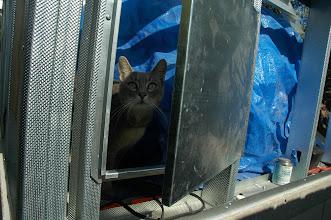 Photo: Cat likes the back door