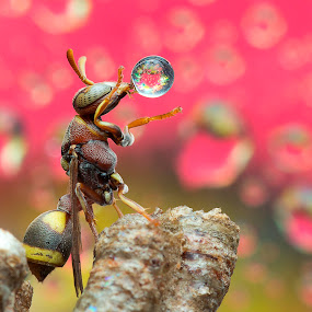 Wasp 160218A by Carrot Lim - Animals Insects & Spiders ( colour, macro, water droplet, insect, wasps )