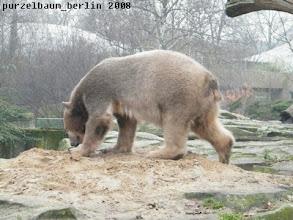 Photo: Wieder hoch zum Sandhaufen ;-)
