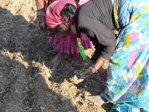 Photo: SWI Sowing  in Doti district, Nepal. 2011 [Photo provided by RB Khadka]