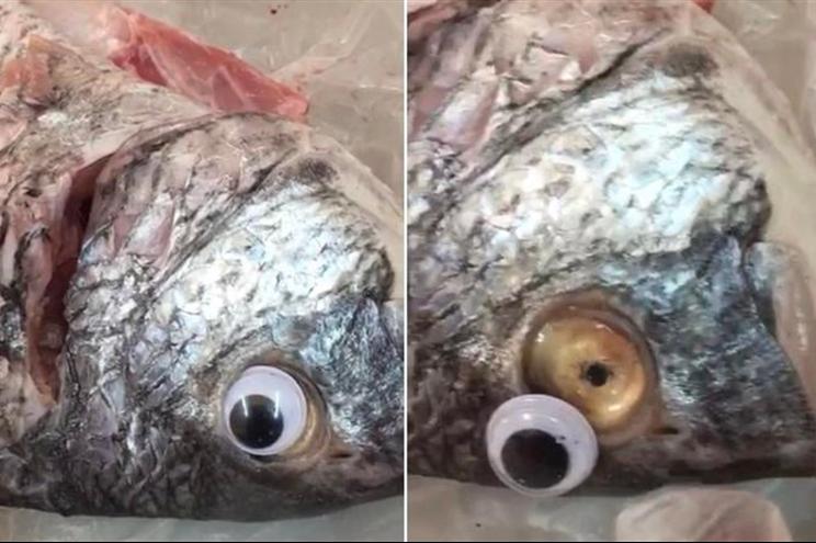 peixes com olhos de plástico