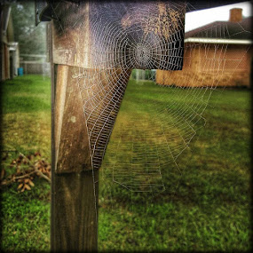 A Morning Spiderweb by Larry Landry - Instagram & Mobile Android ( #morningspiderweb, #aspidersweb, #spiderweb )