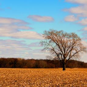 by Mark Wathen - Landscapes Prairies, Meadows & Fields