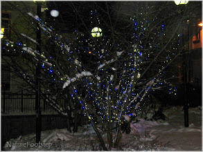 Photo: Snöigt träd utanför järnvägen  http://nfbild.blogspot.com/2011/02/hemma-igen-till-min-varld-home-again-to.html