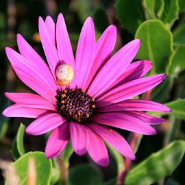 Pink by Gil Reis - Flowers Single Flower ( macro, flowers, nature, bio, life )