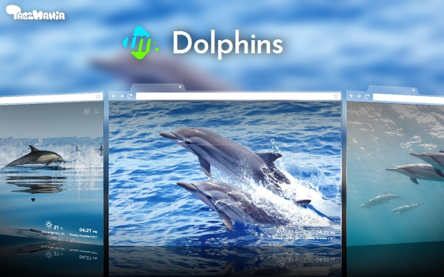 Cute Dolphins Wallpapers New Tab