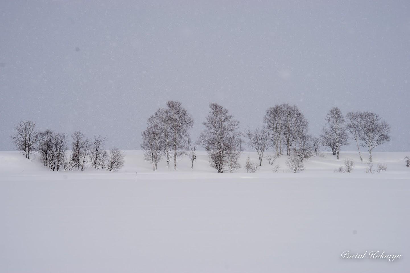 樹木たちの冬の語り合い